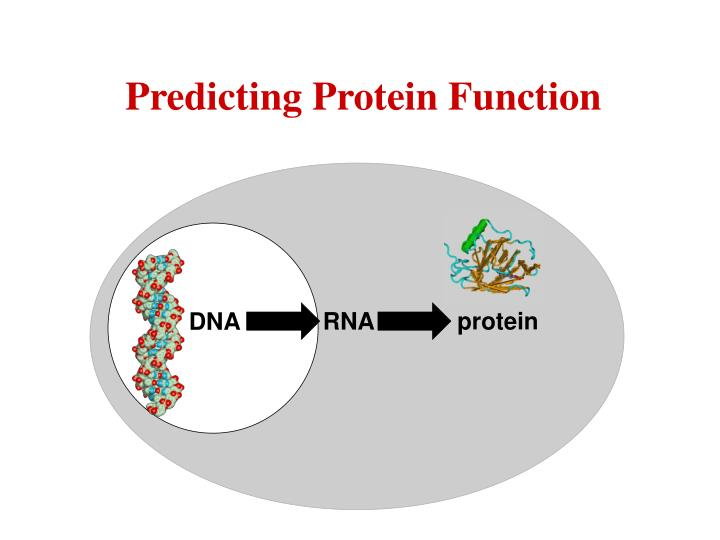 Predicting Protein Function