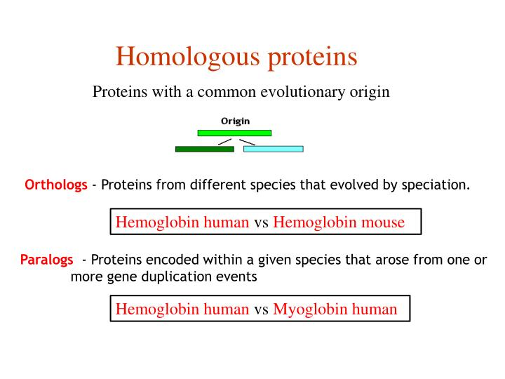 Proteins with a common evolutionary origin