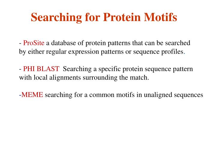 Searching for Protein Motifs