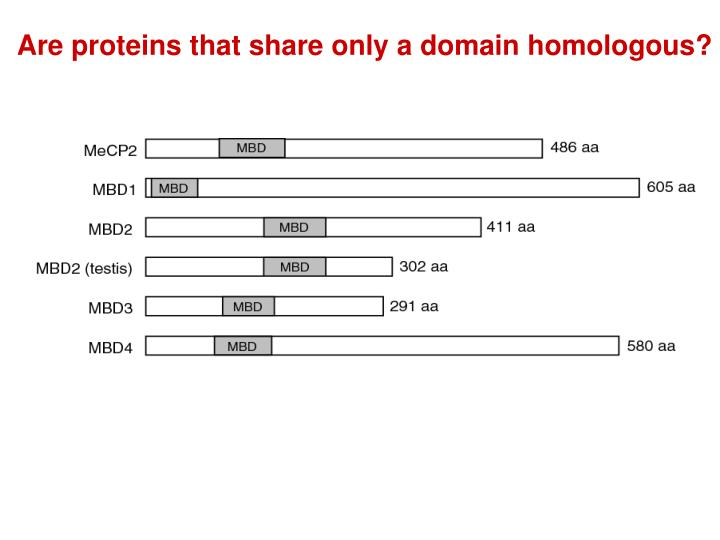 Are proteins that share only a domain homologous?