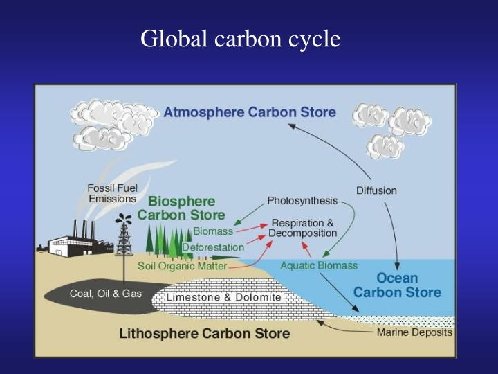 The carbon cycle essay essay writing service the carbon cycle essay here is an essay on the carbon cycle carbon is an essential ccuart Image collections