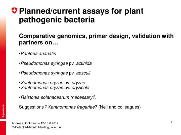 Planned/current assays for plant pathogenic bacteria
