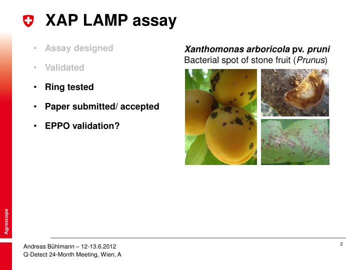 Xap lamp assay