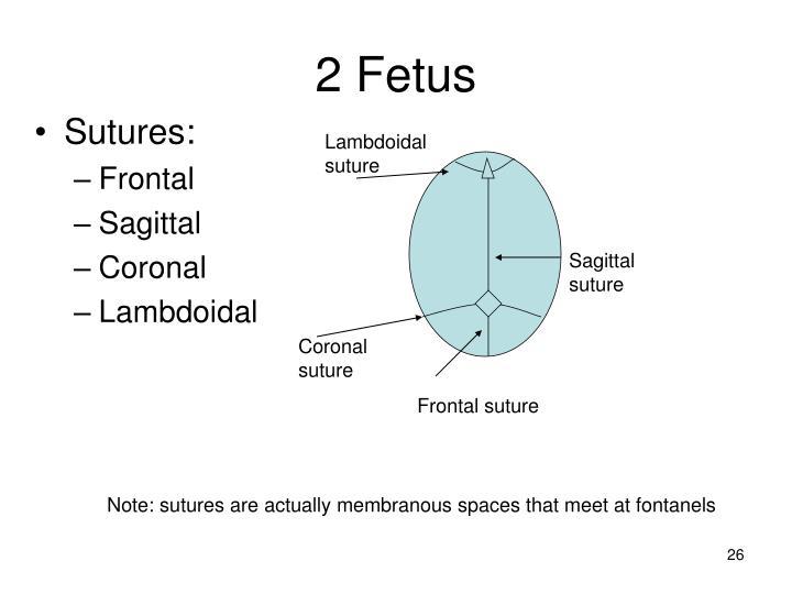 2 Fetus