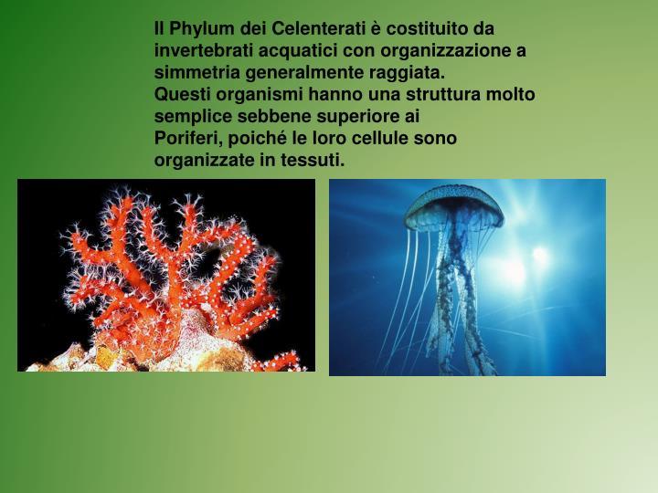 Ppt gli invertebrati powerpoint presentation id 5180046 - Che forma hanno le cellule dei diversi tessuti ...