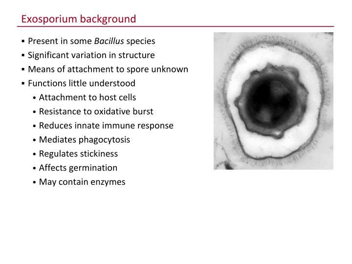 Exosporium background