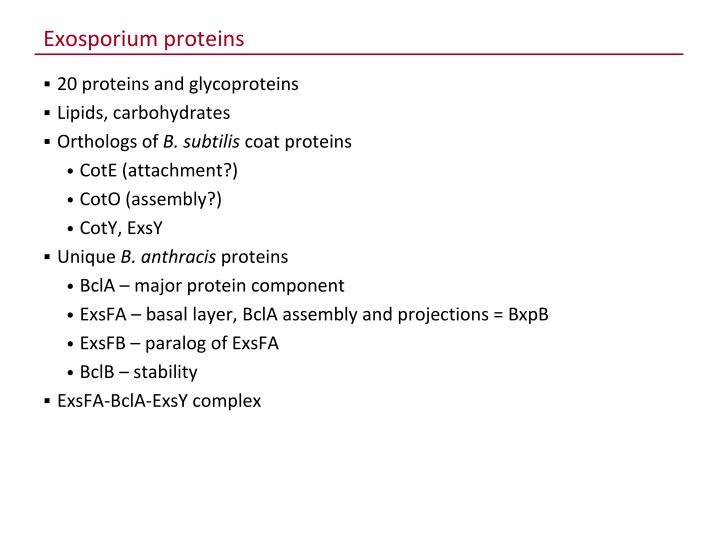 Exosporium proteins