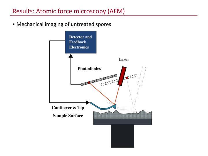 Results: Atomic force microscopy (AFM)