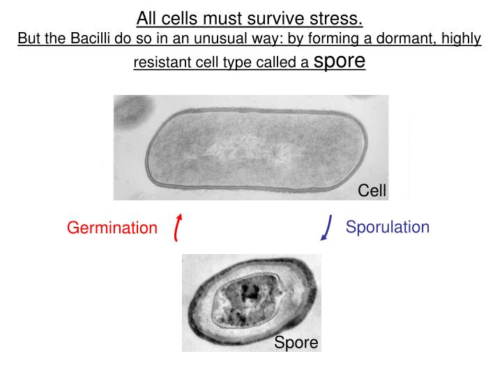 All cells must survive stress.