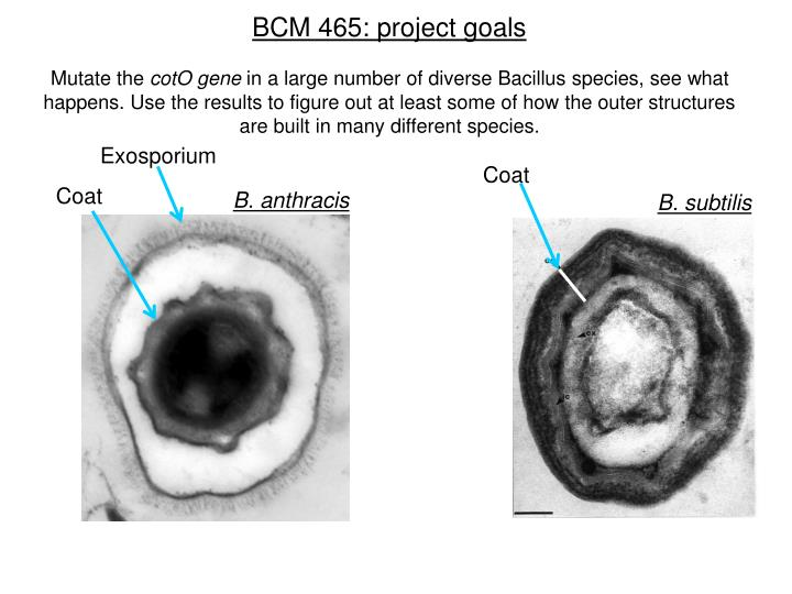 BCM 465: project goals