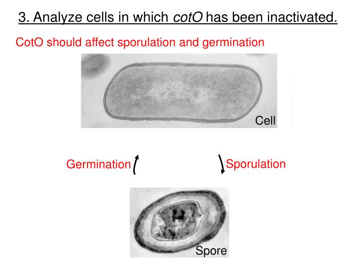 3. Analyze cells in which
