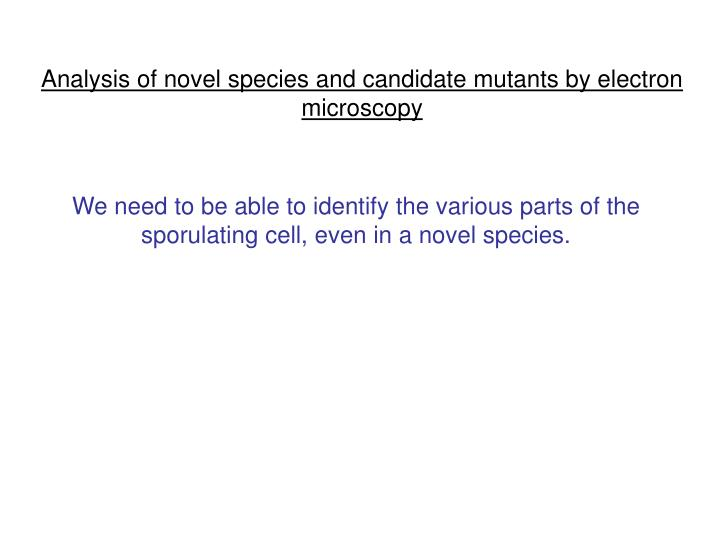 Analysis of novel species and candidate mutants by electron microscopy