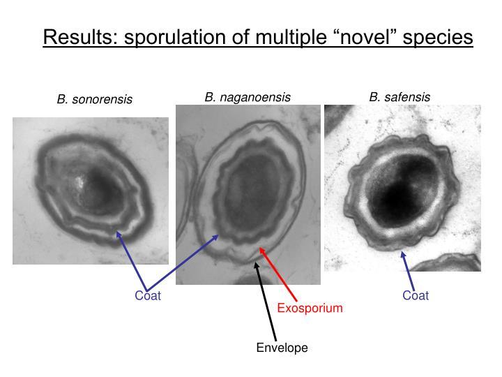"""Results: sporulation of multiple """"novel"""" species"""
