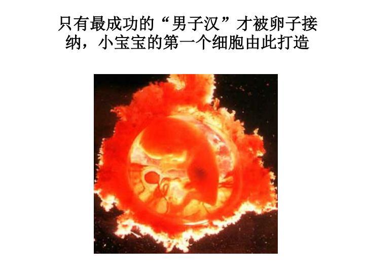 """只有最成功的""""男子汉""""才被卵子接纳,小宝宝的第一个细胞由此打造"""