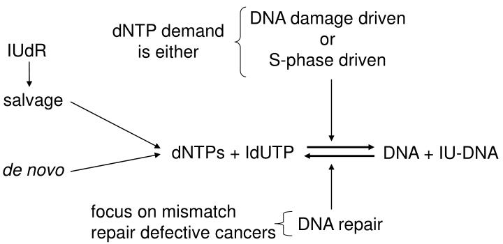DNA damage driven