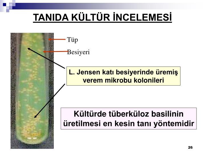 TANIDA KÜLTÜR İNCELEMESİ