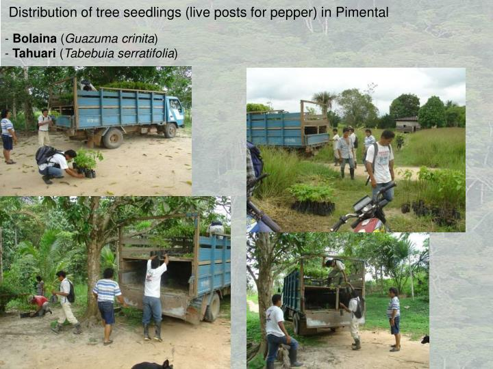 Distribution of tree seedlings (live posts for pepper) in Pimental