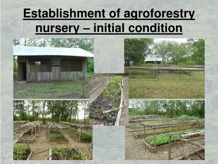 Establishment of agroforestry nursery – initial condition