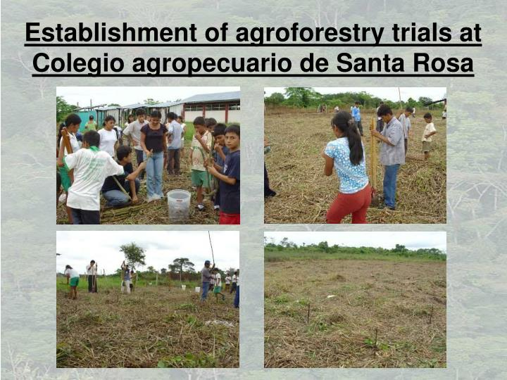 Establishment of agroforestry trials at