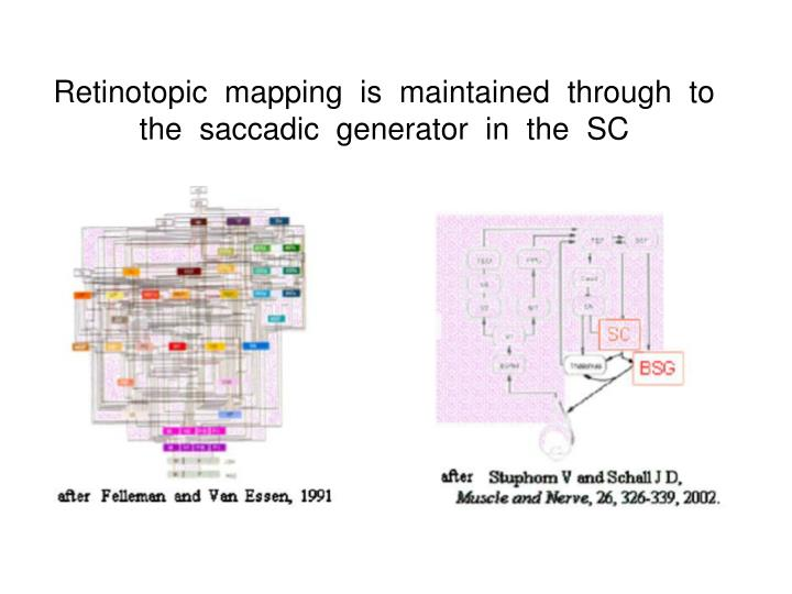 Retinotopic  mapping  is  maintained  through  to  the  saccadic  generator  in  the  SC