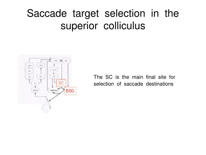 Saccade  target  selection  in  the  superior  colliculus