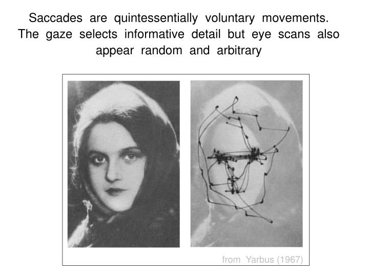Saccades  are  quintessentially  voluntary  movements.