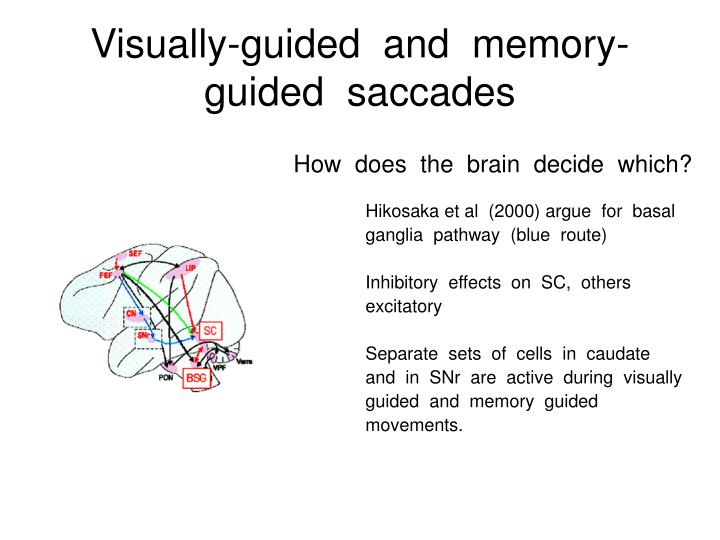 Visually-guided  and  memory-guided  saccades