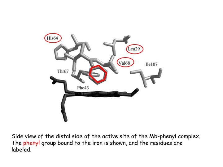 Side view of the distal side of the active site of the Mb-phenyl complex. The
