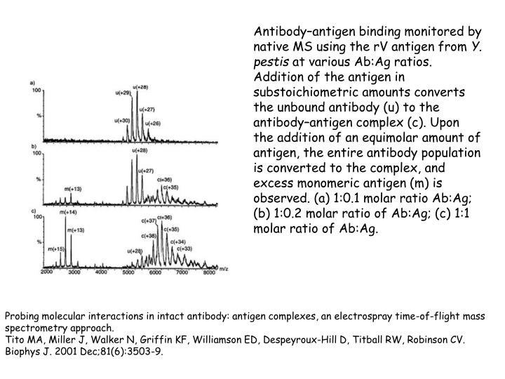 Antibody–antigen binding monitored by native MS using the rV antigen from