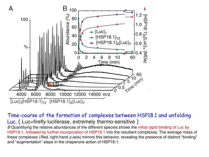 Time-course of the formation of complexes between HSP18.1 and unfolding Luc. (