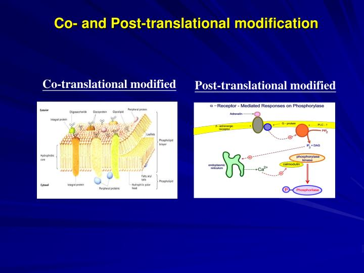 Co- and Post-translational modification