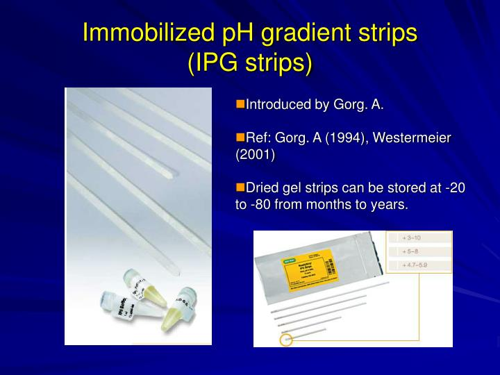 Immobilized pH gradient strips