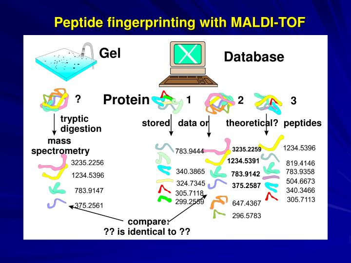 Peptide fingerprinting with MALDI-TOF