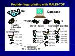 peptide fingerprinting with maldi tof