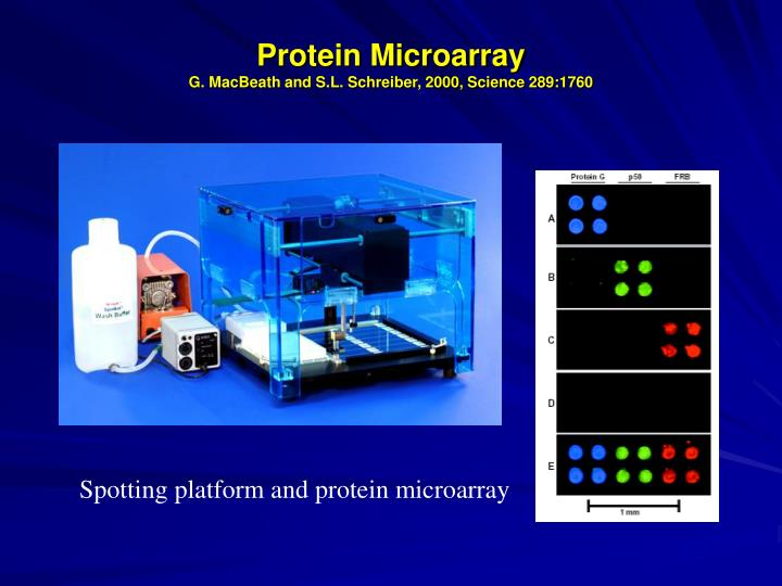 Protein Microarray