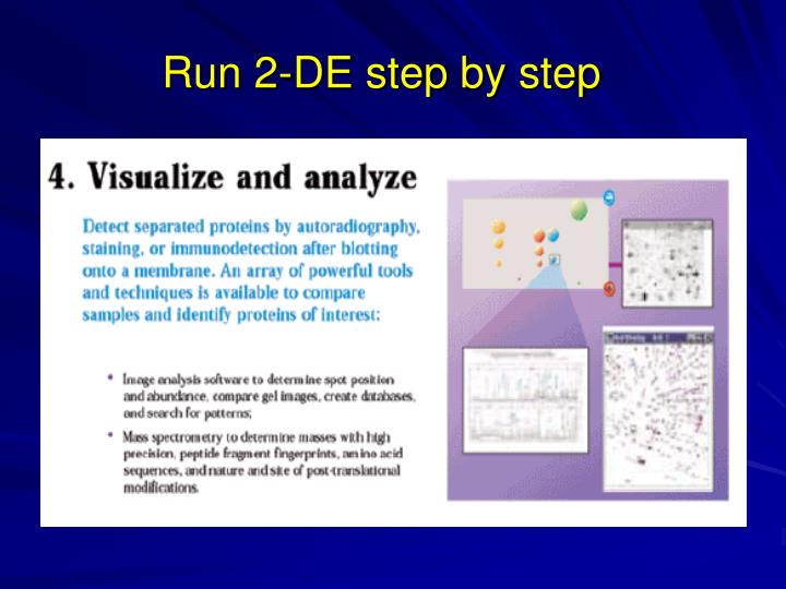 Run 2-DE step by step