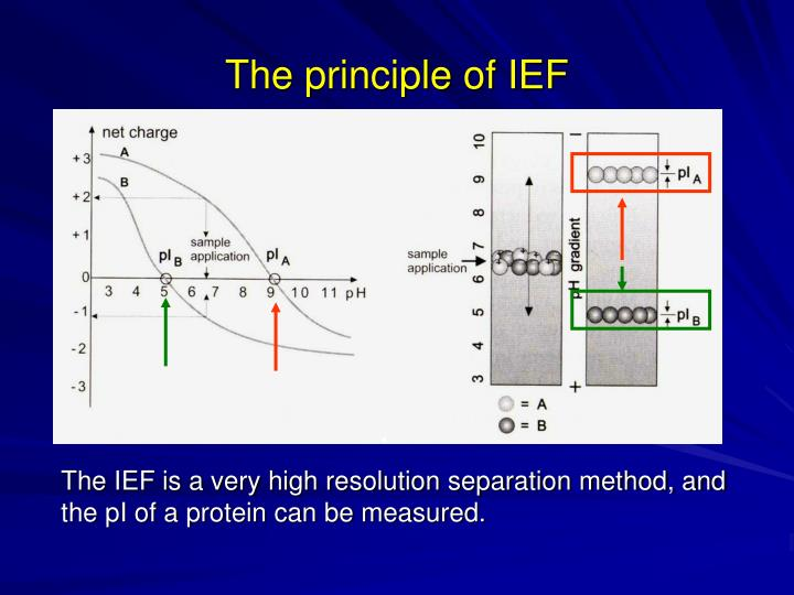 The principle of IEF