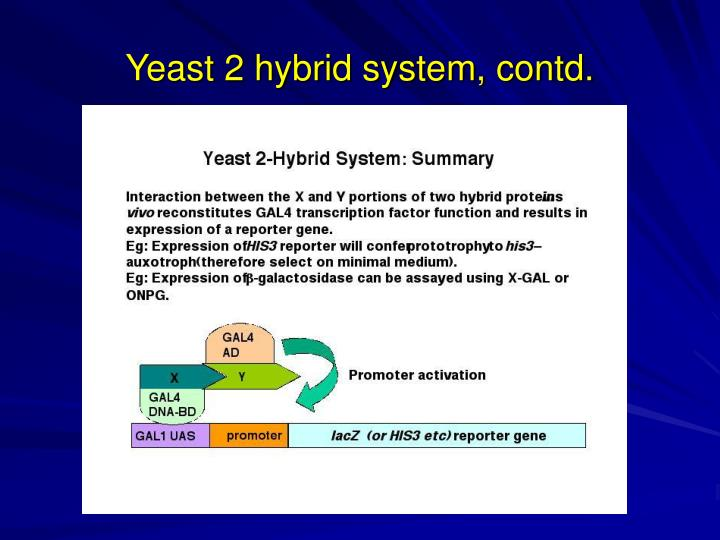 Yeast 2 hybrid system, contd.
