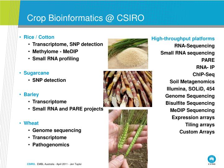 Crop Bioinformatics @ CSIRO