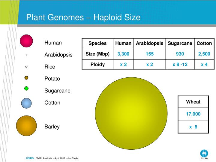 Plant Genomes – Haploid Size