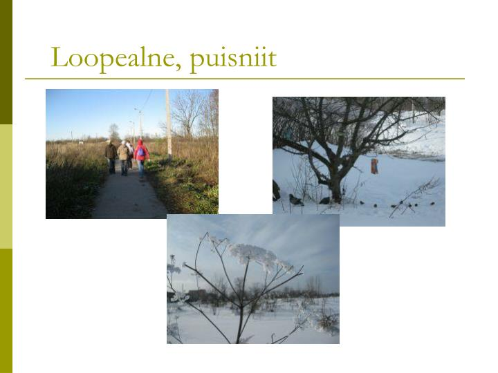 Loopealne, puisniit