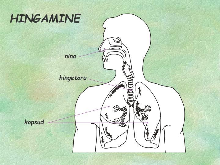 HINGAMINE