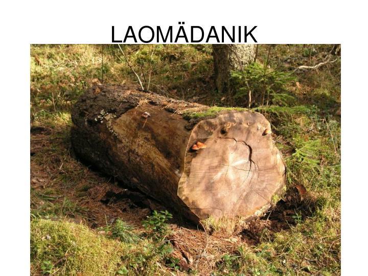 LAOMÄDANIK