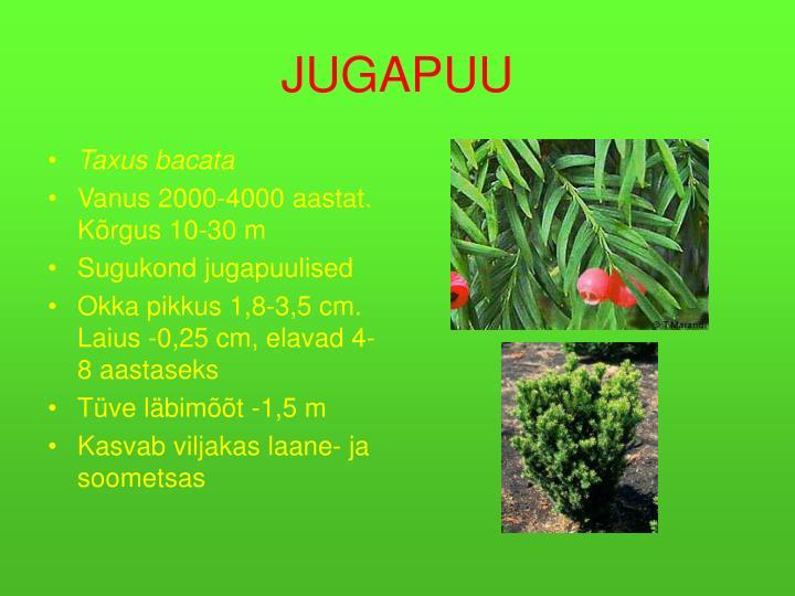 JUGAPUU