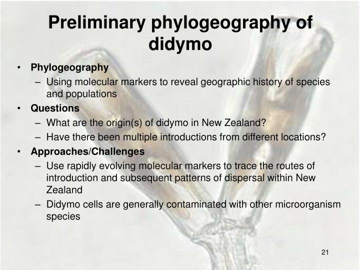Preliminary phylogeography of                  didymo