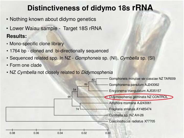 Distinctiveness of didymo 18s