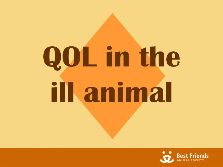 QOL in the