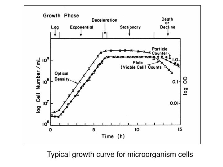 Typical growth curve for microorganism cells