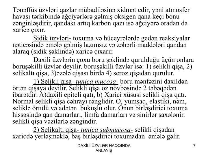 Tənəffüs üzvləri