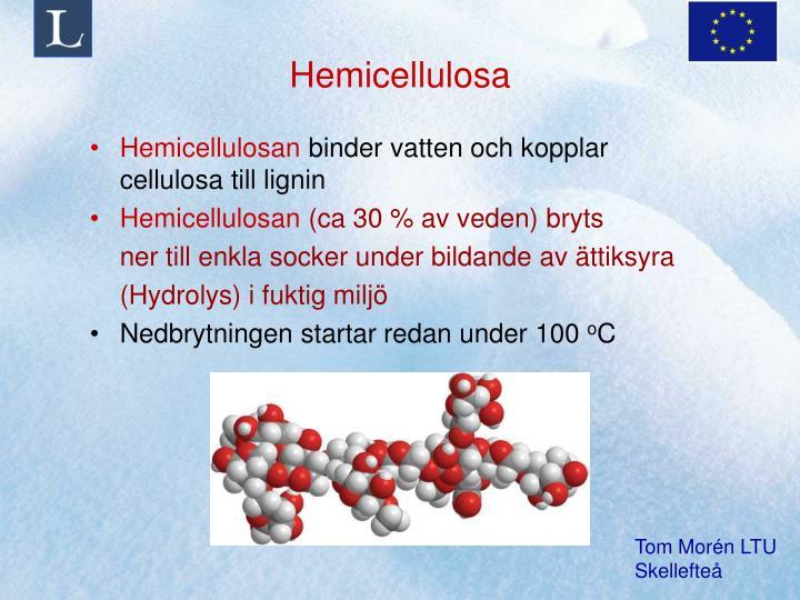 Hemicellulosa